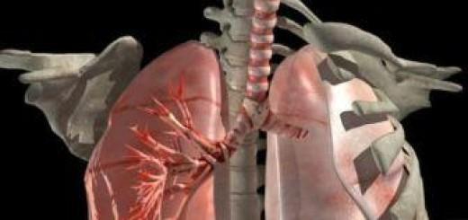 Trachea-3d